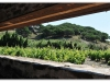 2012_06_23_oenotourisme_collioure_453-version-2