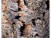 2012_06_23_oenotourisme_collioure_486-version-2